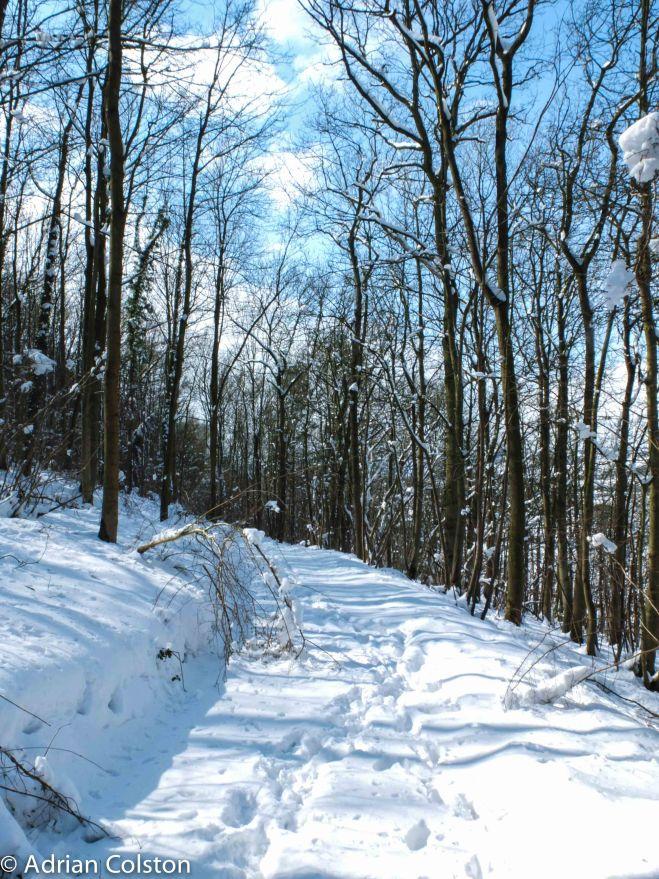 Wenlock Edge snow