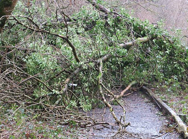 Lydford tree