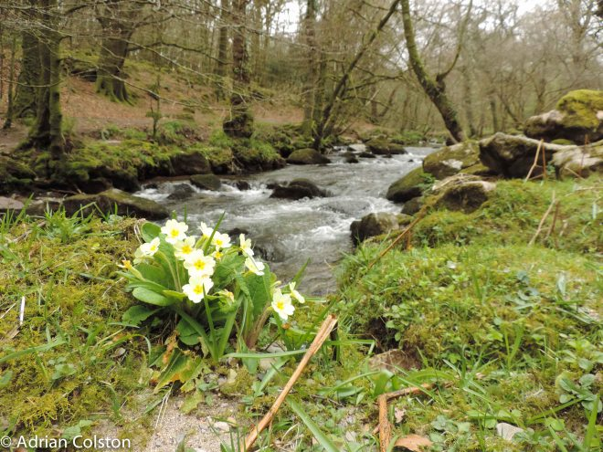 River Meavy 7