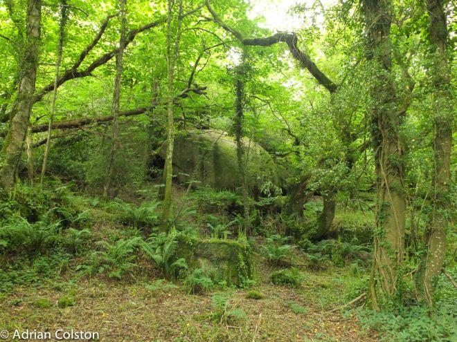 Shaptor Woods 2