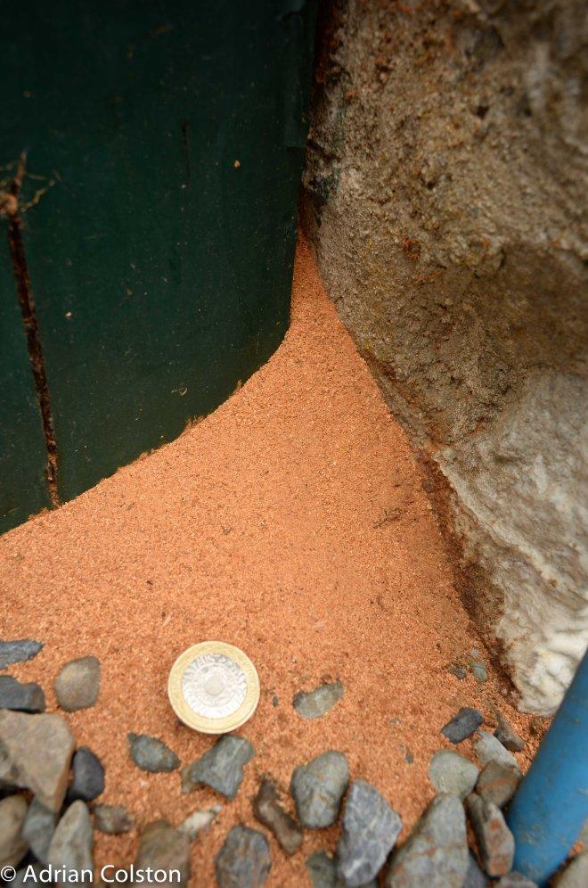Digger wasp post coin
