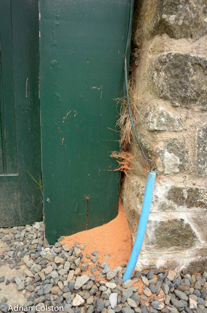 Digger wasp post