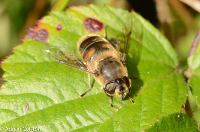 how to get into honeybee inn