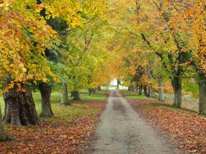 Parke avenue