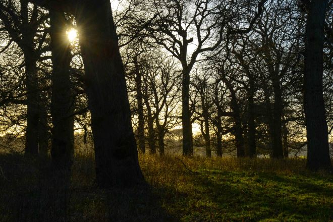 Holkham Park1