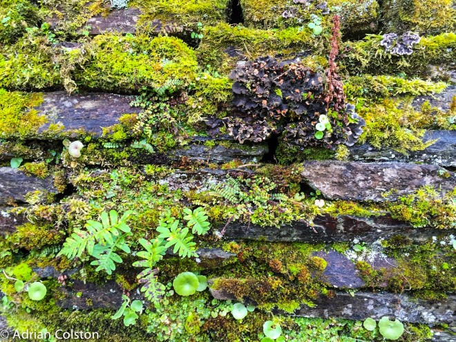Buckland Wall 3