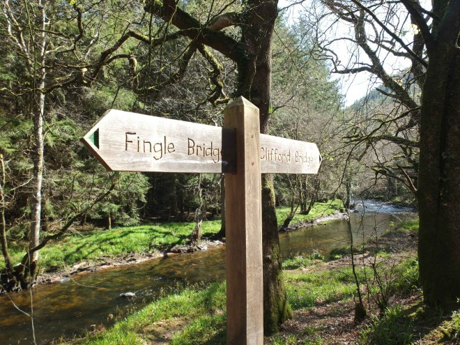Fingle Woods 1