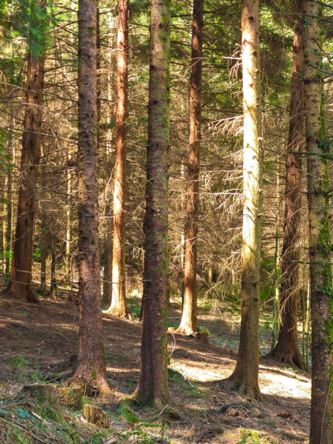 Fingle Woods 2