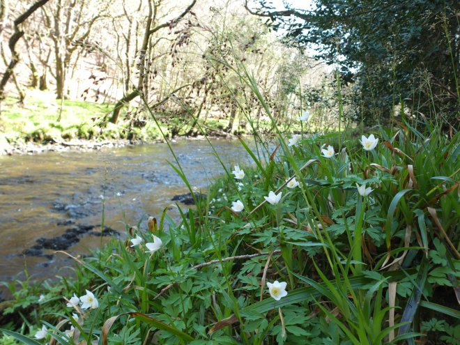Fingle Woods 3