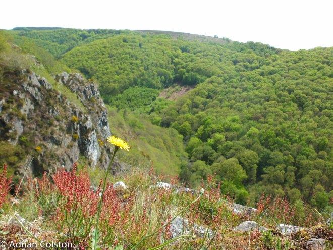 Teign Valley 1