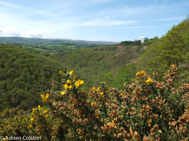 Teign Valley 2