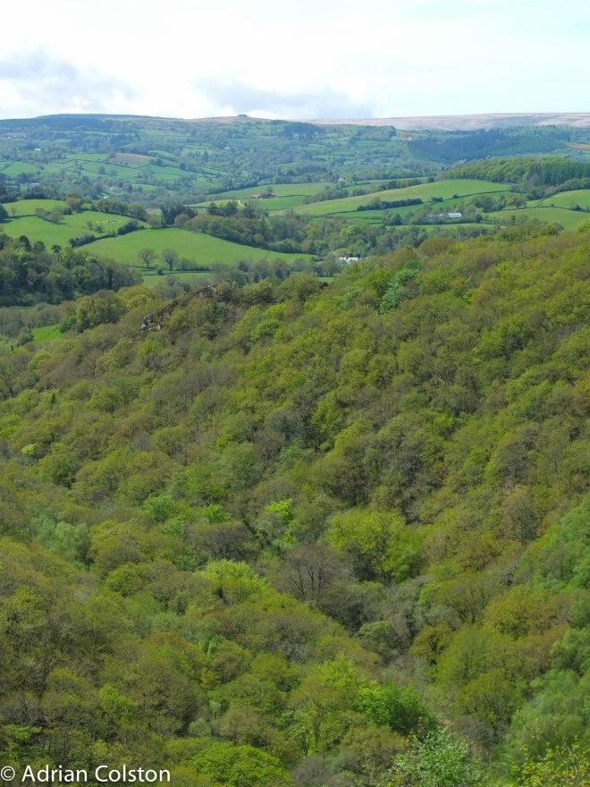 Teign Valley 3