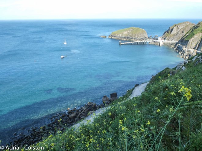 Lundy cabbage 1
