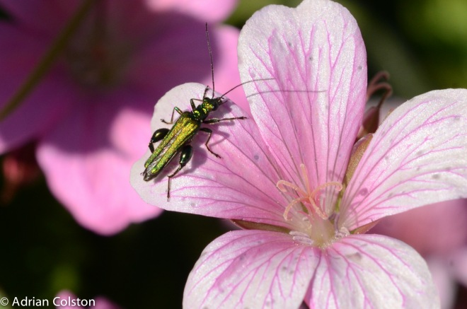 Parke insects3