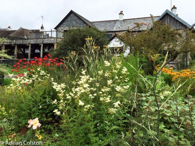 Finch's garden
