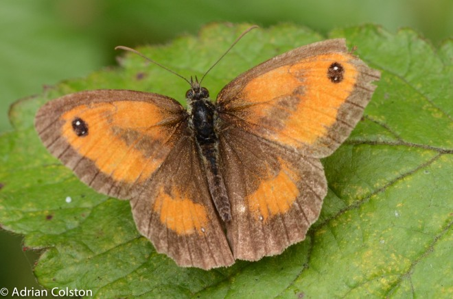 Tatty gatekeeper