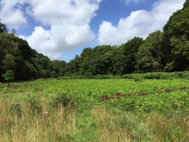 Burchetts Meadow