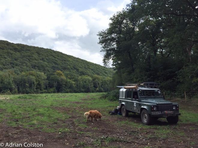 Ross's meadow 3
