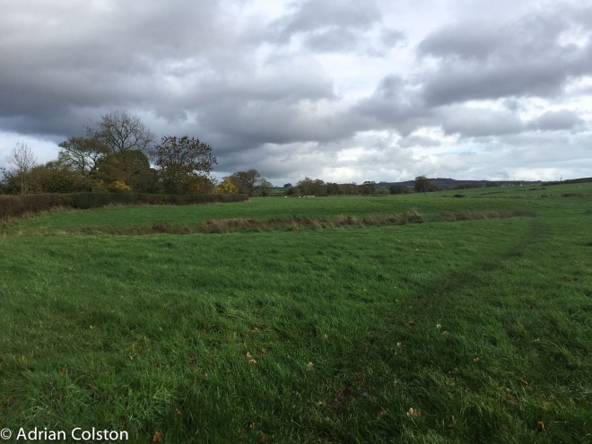 Exton grass