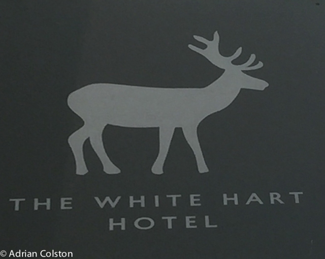 White hart1