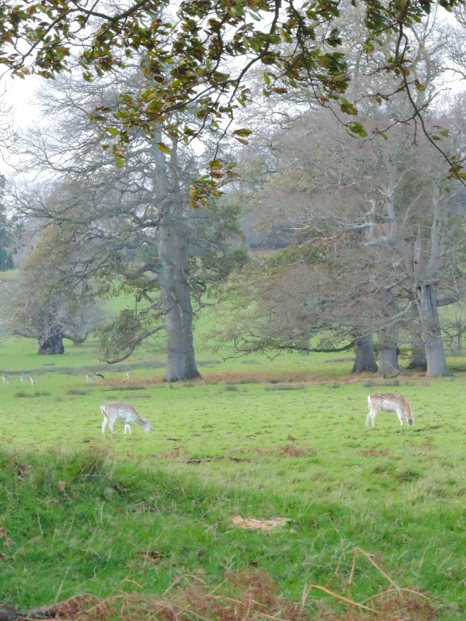Powderham3