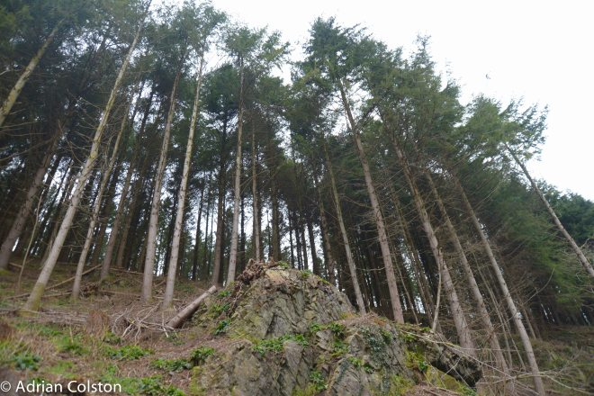 Cod Wood