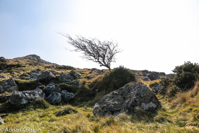 Hawthorn and Belstone Tor