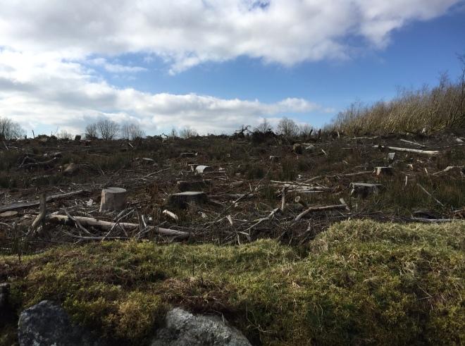 Holming Beam woodland