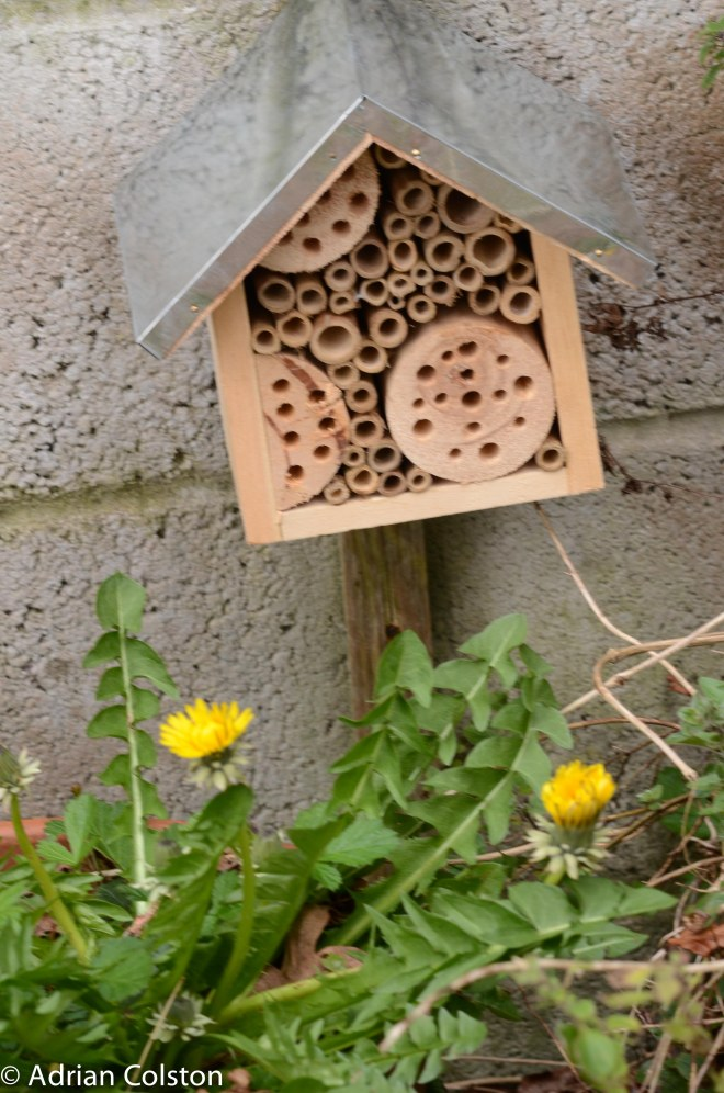 Bee hotel 1