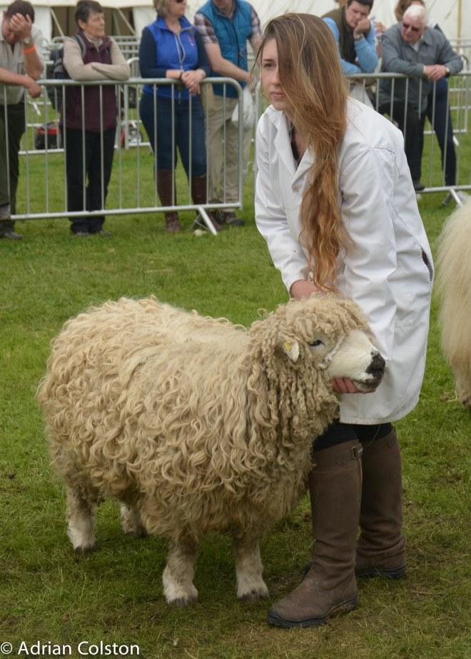 Gretface Dartmoor