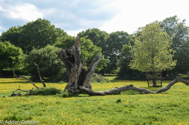 Hatfield Forest 3