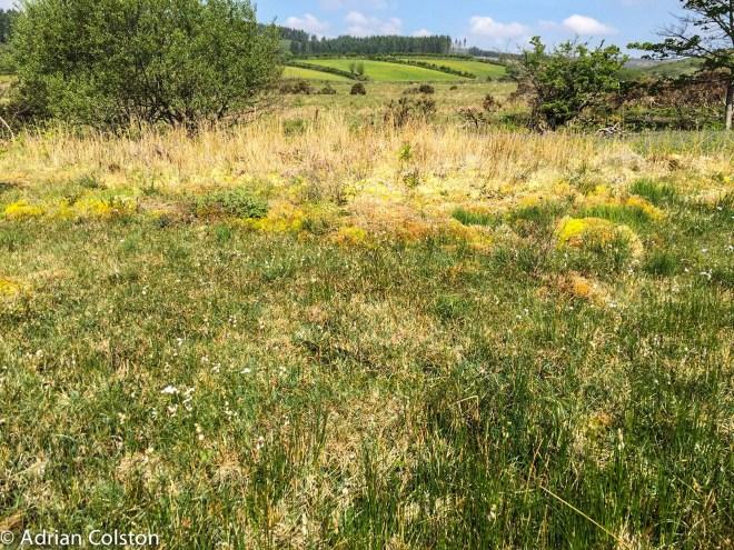 Rhos Pasture 1
