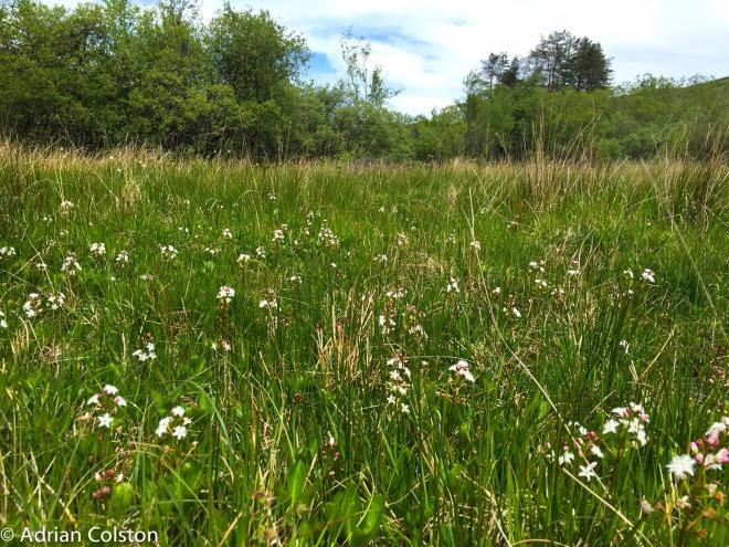 Rhos Pasture 2