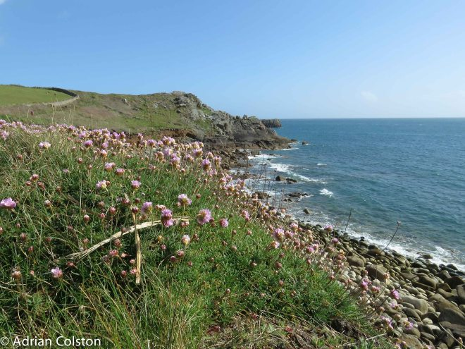 Up to Peninnis Head