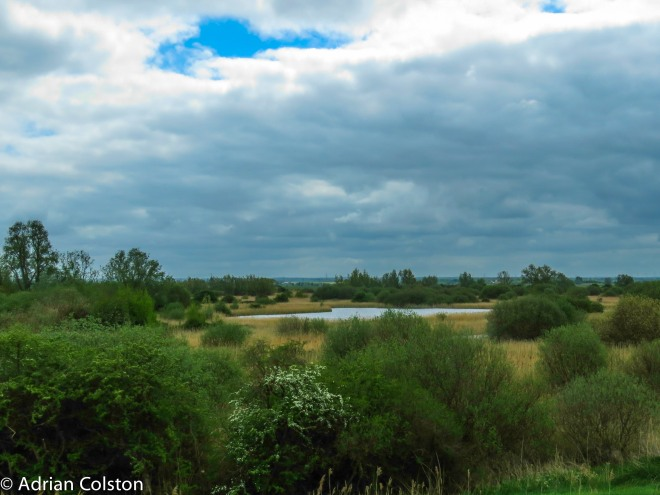 Wicken Fen 4