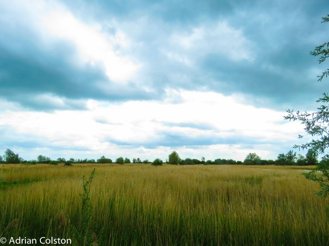 Wicken Fen 7