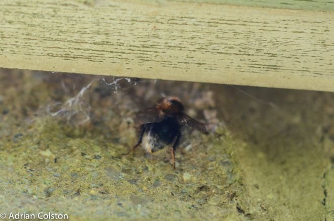 Tree bumblebee nest hole 2