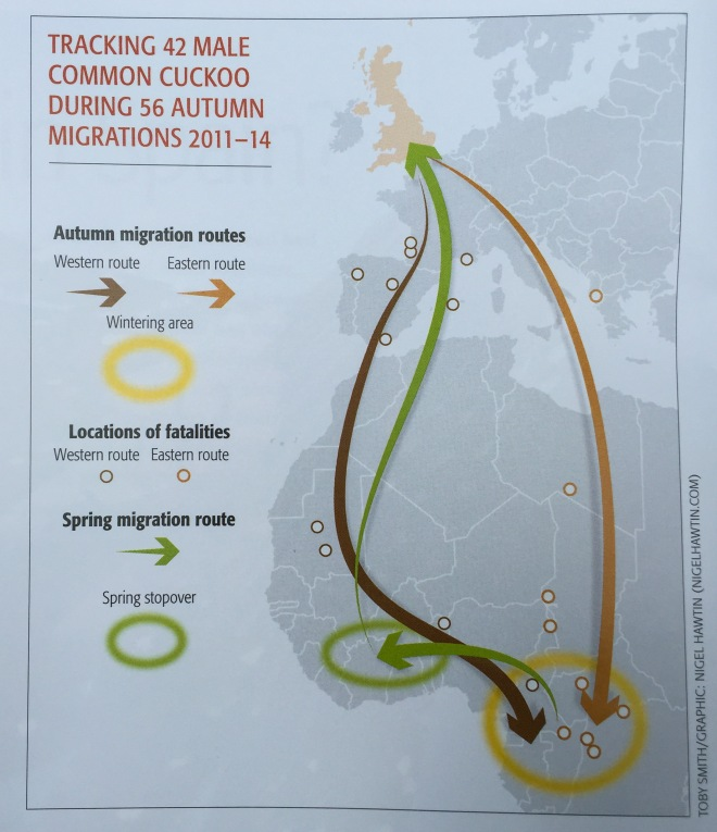 BTO cuckoo migration map