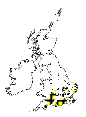 Mocha -distribution
