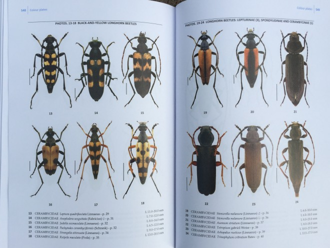 Beetles vol 4 3