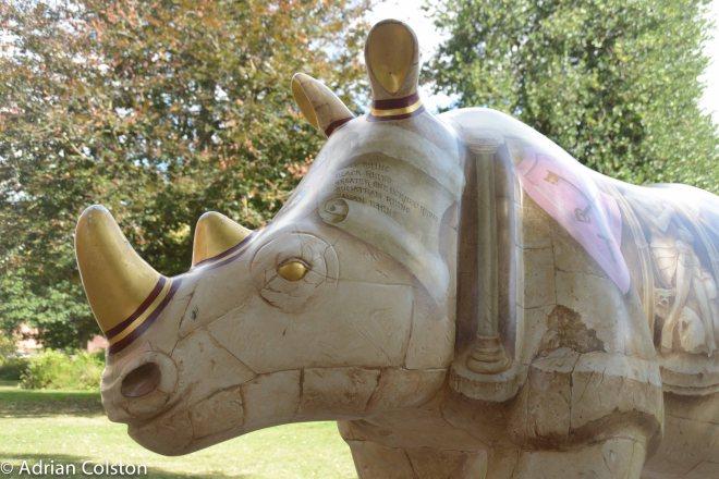 Rhinos 11