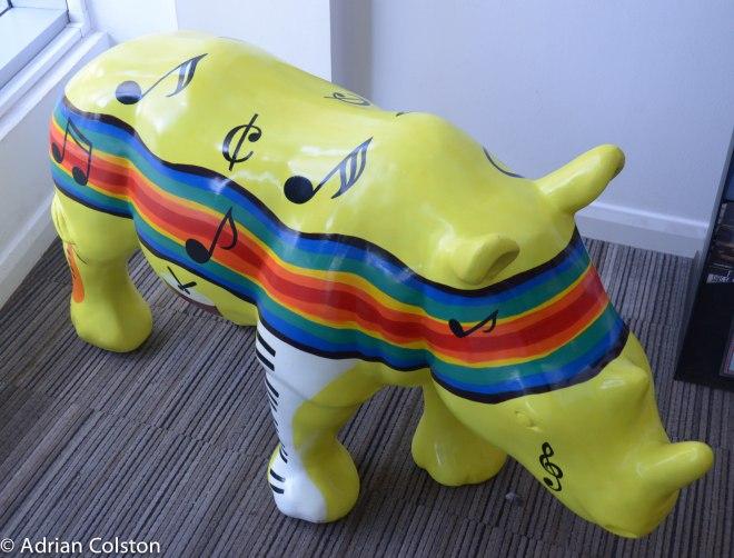 Rhinos 16