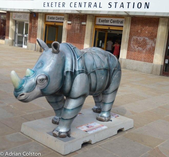 Rhinos 18
