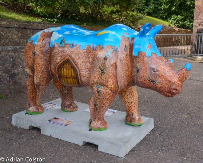 Rhinos 20