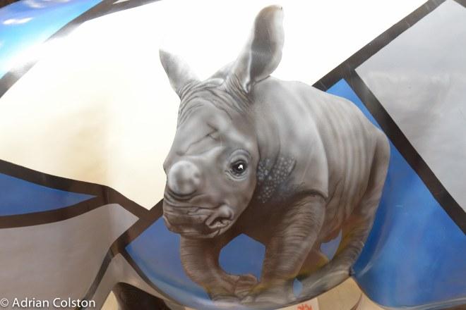 Rhinos 41