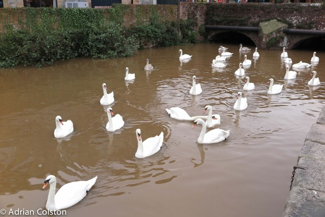 exeter-flood-water-6