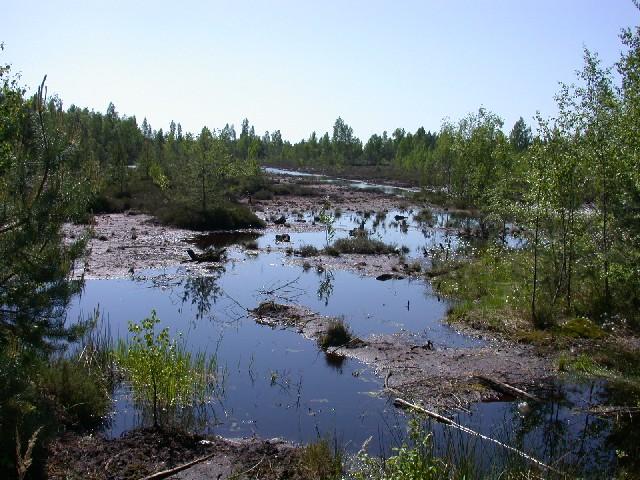restored-bog-beavers4