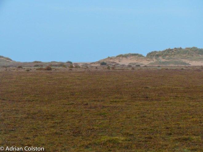 saltmarsh-and-dune